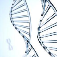 DNA Test Duesseldorf